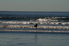 Tofino-46 (TaufeeqK) Tags: sunset sea mountain canada birds vancouver sunrise surf surfing tofino