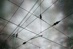Leitungen (Turikan) Tags: hauptbahnhof 100 konica agfa a4 apx dortmund caffenol