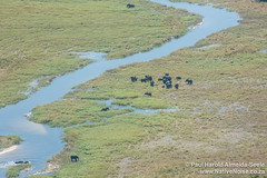 Aerial Shot Of Elephants In The Okavango Delta, Botswana