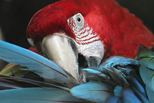 Thumbnail from Dusit Zoo
