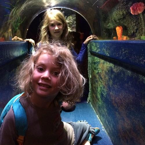 In the underwater tunnel at Melbourne Aquarium