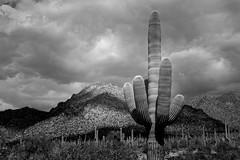 Desert Storm (GeminEye27) Tags: arizona cactus bw storm desert saguaro saguaronationalpark