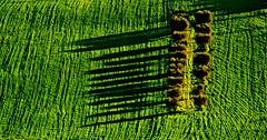 (enricoerriko) Tags: china nyc venice red sea italy sun paris rome green london bicycle yellow japan graffiti design la photo moscow tag beijing banana luna campagna cielo 北京 sole murales mercato fahrrad italie marche shangai globo enrico arancione celeste 中國 bicicletta pékin москва sforza pechino blù civitanovamarche portocivitanova indaco rossoblù citanò xeđạp sanmarone nikite erriko civitanovese annibalcaro cluana enricoerriko fotodicivitanovamarche hồchìminh