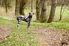 Wo bleibt ihr? (blumenbiene) Tags: dog white black dogs female walking hund schwarz dalmatian hunde spaziergang gassi dalmatiner weis hündin freilauf