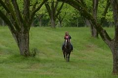 Between Races (Get The Flick) Tags: horse rider pecantrees pecanorchard barnesvillega flintriverarena