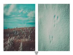 Printemps tardif (simon.chanez photographie) Tags: nature landscape nikon nikko paysages vosges sauvage simonchanezphotographie sigmaart