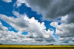 Minnesota (gleesang) Tags: summer cloud nature beautiful beauty field minnesota clouds landscape nikon grain wide wideangle mn 2009 cloudscape nosha ul20090809