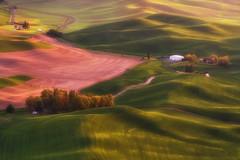 Palouse Sunset (Wind Walk) Tags: steptoe butte state park sunset palouse washington rolling hill curve