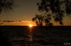 Under the sheoaks (core_personal_training) Tags: australia nsw centralcoast jetty longjetty lake water sea sunset sunrise sun clouds cloud sky landscape dslr nikon nikond3300 nikkor1855 orange theentrance