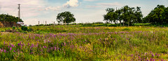 TexasHillCountry_1 (allen ramlow) Tags: flowers trees summer landscape texas sony country hill panoramic photomerge a6000 sel1670