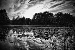 The Fishing Hole (Silverio Photography) Tags: pond nature clouds summer suburb stoughton massachuetts newengland canon 60d sigma 1770 photoshop elements topaz adjust hdr water reflection landscape blackandwhite blackwhite bnw
