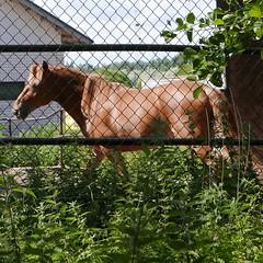 Ravuri (neppanen) Tags: horse suomi finland helsinki hevonen vermo discounterintelligence sampen ravuri helsinginkilometritehdas pivno46 reittino46 reitti46 piv46