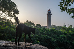 Guardian of Lighthouse (Ivon Murugesan) Tags: travel trees dog lighthouse nature animal friend rocks places urbanexploration mahabalipuram mamallapuram letsexplore