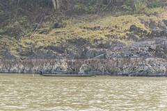_RJS8234 (rjsnyc2) Tags: richardsilver richardsilverphoto richardsilverphotography nikon nikond810 d810 laos intrepidtravel asia mekong river mekongriver water travel travelphotographer travelphotography