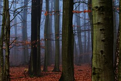 Sachsenwald (annazelei) Tags: serene outdoor forest wood woods landscape november tree trees texture naturaleza nature fall autumn mist fog foggy natur colours light perspective