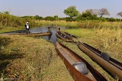 15-09-19 Ruta Okavango Botswana (68) R01 (Nikobo3) Tags: frica botswana delta deltadelokavango okavango parque naturaleza mokoro travel viajes nikon nikond800 nikon247028 nikobo josgarcacobo flickrtravelaward ngc unesco omot twop color culturas