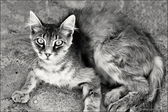bosa (heavenuphere) Tags: bosa oristano sardegna sardinia sardinie italia italy europe island cat bw 24105mm