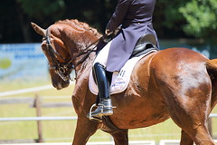 IMG_4973 (dreiwn) Tags: horse pony horseshow pferde pferd equestrian horseback reiten horseriding dressage reitturnier dressur reitsport dressyr dressuur ridingclub ridingarena pferdesport reitplatz reitverein dressurreiten dressurpferd dressurprfung tamronsp70200f28divcusd jugentturnier