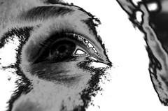 Kapitel 1 (Claudio Taras) Tags: claudio contrasto taras trier fd50mm portrait bw biancoenero monocromo monochrom digital ps