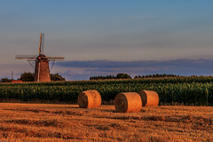 Sunset on Steenmeulen (Explored) (Mathay Jean-Luc) Tags: terdeghem nordpasdecalaispicardie france fr canon eos sigma landscape field calm quiet outdoor moulin windmill flandre flanders steenmeulen strawbales bottesdepaille mas corn ciel sky nuages clouds sunset coucherdesoleil maize arbres trees nature summer t orange green colours couleurs rural campaign campagne cielo countryside scenery europe maiz molino atardecer sonnenuntergang mhle windmhle himmels wolken nubes fardodeheno valla strohstiefel