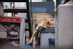 4502016/8/5 (Natsuki_y) Tags: cats cat straycat snap tokyo 5d 24105mm canon