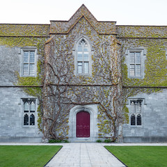 Natural Decoration (Peter E. Lee) Tags: stone spring building window ireland college nationaluniversityofireland 2016 ire slate door university tree nuigalway galway architecture republicofireland creeping roi eire vine ie