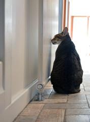 the weekend was............ (graeme37) Tags: orientalcat hazel hydronicheater cat