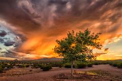 Glowy Sunset (inlightful) Tags: sunset sunrise sun sunshine glow glowy clouds sky rain virga storm monsoon southwest desert tree dirt dirtroad newmexico socorrocounty rural nature