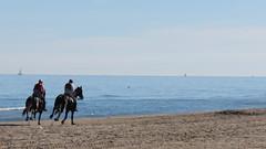 IMG_9576.JPG (gianpierocornice) Tags: tortoreto hourse cavalli adriatico abruzzo spiaggia italy