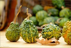 Pumpkins (tehhyvredina) Tags: canonef100mmf28usmmacro autumn pumpkin apothecarygarden hortusru moscow colorsofautumn canon100mm fujifilmxe1