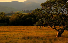 The Magic Hour (Cal Killikelly) Tags: ynyshir rspb nature wildlife reserve midwales