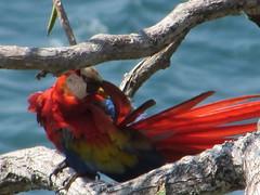 hula hoop sat 067 (Learn, Love, Conserve) Tags: hulahoop saprissa puntaleona feriaverdearanjuez