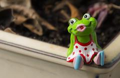 Kiss me.....baciami (Nikko  Thanks +500.000 view) Tags: nikon italia princess frog rana kissme principessa baciami ranocchia d7100