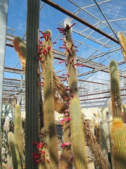 IMG_4011 (wallygrom) Tags: cactus england cacti westsussex succulents angmering cactuscollection manornursery manornurseries