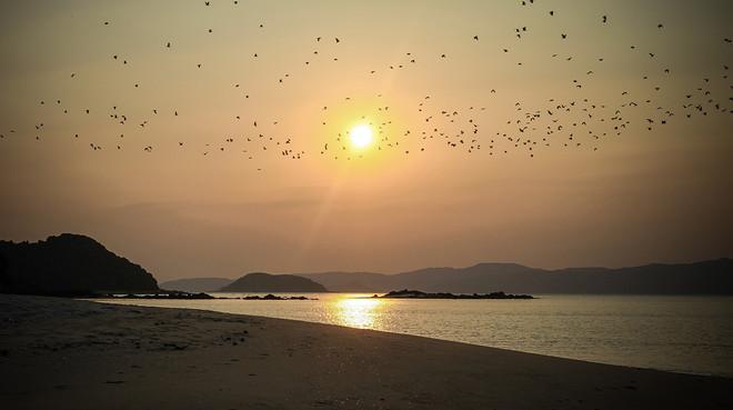 Hàng nghìn con chim bay qua ánh mặt trời lúc bình minh trên đảo Cô Tô