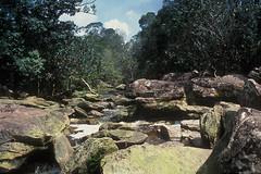 Kampot - Jungle River