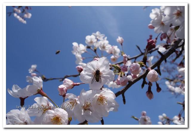 사귀포유체꽃축제46