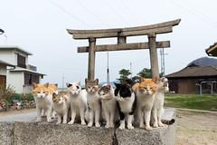 佐柳島 ネコ (GenJapan1986) Tags: 2015 ネコ 佐柳島 動物 多度津町 旅行 離島 香川県 鳥居 日本 japan kagawa travel island cat animal nikond610 sanagiisland