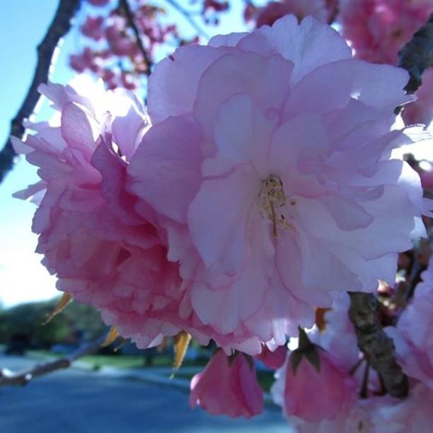 Blossom painting pennsville nj