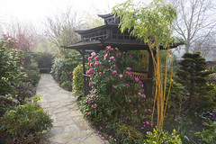 Pagoda and camellia flowers in early morning (Four Seasons Garden) Tags: uk england garden four pagoda wooden spring seasons oriental walsall