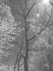 IMG_2244 (polishamericanphotographer) Tags: park blackandwhite lake nature water canon natural lakes parks westside blacknwhite canonpowershot waterscape berea clevelandmetroparks blackandwhiteinfrared wallacelake cuyahogacounty beautifulohio bereaohio canonpowershotg11 canong11 westerncuyahogacounty southwestcuyahogacounty piknaohio southwesterncuyahogacounty canonpowershotg11infrared