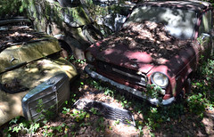 AA0_8519 (jacques sof) Tags: auto trees car automobile voiture arbres mercedesbenz greenery oldcar wreck casse foret bit verdure autobianchi abarth abandonn vieillevoiture pave abandonedgivenup breakinbreakage