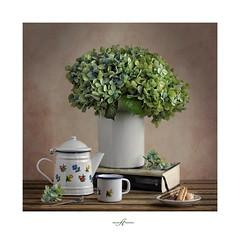 ................................ (.... belargcastel ....) Tags: stilllife flores still bodegn texturas hortensias belargcastel belnargeso cumpleizaskun
