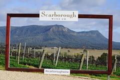 Framed: Brockenback Range (Blue Mtns. bush girl) Tags: scarboroughwineco hunter valley brokenback range