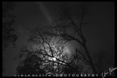 Insomnia (usmannadeem) Tags: night photography photographylovers naturephotography plant tree moon insomnia photographybyusmannadeem flickrdaily