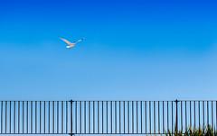Lonely Seagull (Gary Norman) Tags: blue summer sky nature birds seaside seagull gull minimal minimalism minimalist