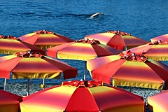 La bracciata (meghimeg) Tags: 2016 chiavari mare sea ombrelloni umbrellas spiaggia beach sabbia sand colori colors donna woman nuoto swimming nuotatrice swimmer rosso red blu blue giallo yellow