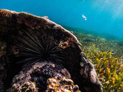 Sheltered (spencer_r_allen) Tags: travel sea vacation swim mexico underwater snorkel olympus urchin tough waterproof garrafon islamujeres quintanaroo tg4