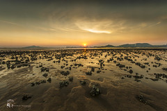 Ha Pak Nai () Tags:  hapaknai yuenlong hongkong landscape mud nikon reflection cloud      sunset sunrise sunlight clouds    gloaming