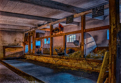 the old roost (Dale Michelsohn) Tags: old stable roost hen coop chicken fowl bird eggs farm barn dalemichelsohn nikon d7000